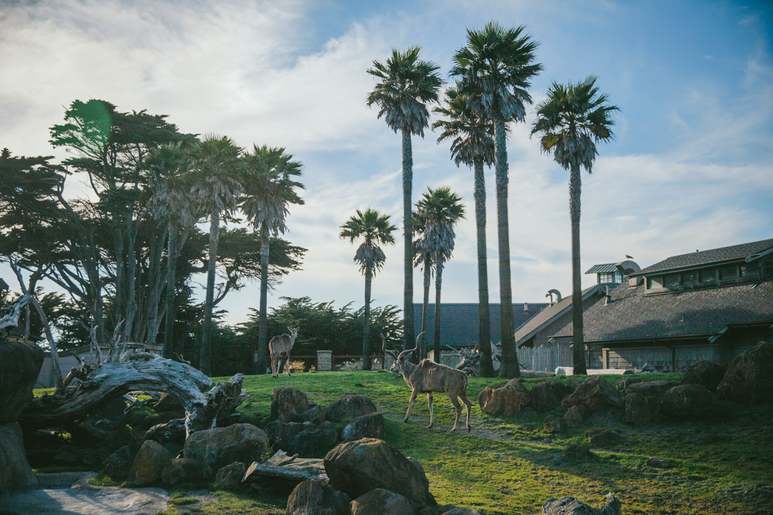 Backdrop to a wedding at the San Francisco zoo by Becca Henry photography