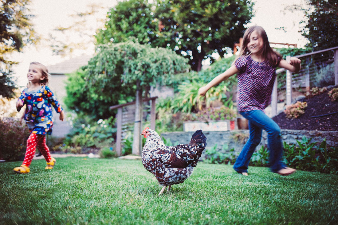 Two girls running circles around a chicken - family documentary photography by Becca Henry Photography