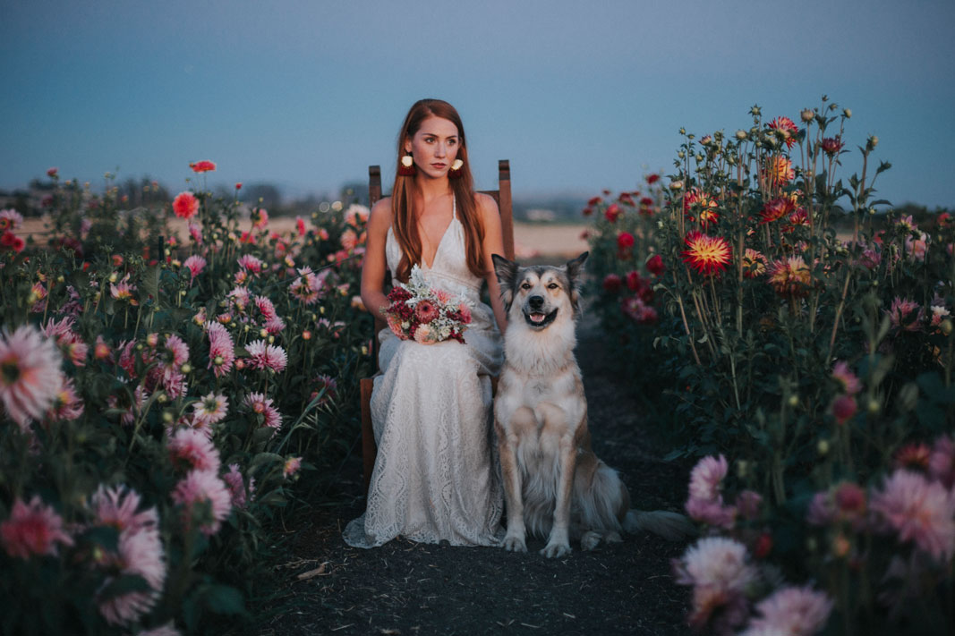 Bride and dog in a field of flowers at Aztec Dahlia farm in Petaluma by Becca Henry Photography. Bouquet by Beijafloralbotanical.