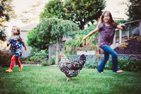 Becca Henry Photography- Sisters running around their chickens - Oakland California